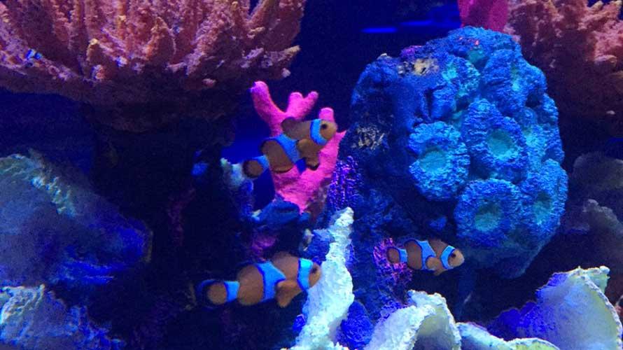 平日のレオンAltacia Mallの水族館はガラガラ