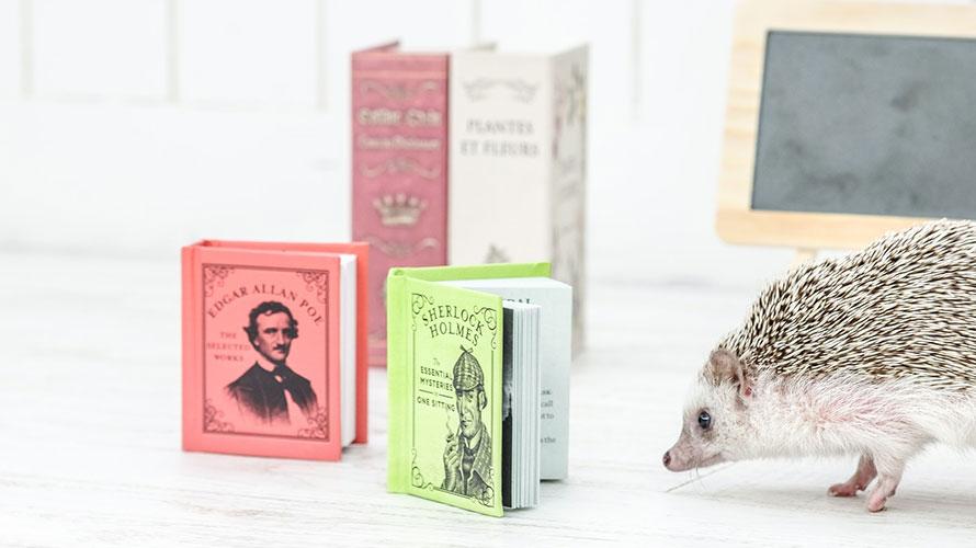 本とハリネズミ
