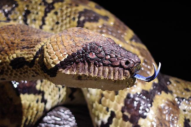 ヘビの模型