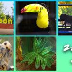 レオン動物園(1年半ぶり2回目)