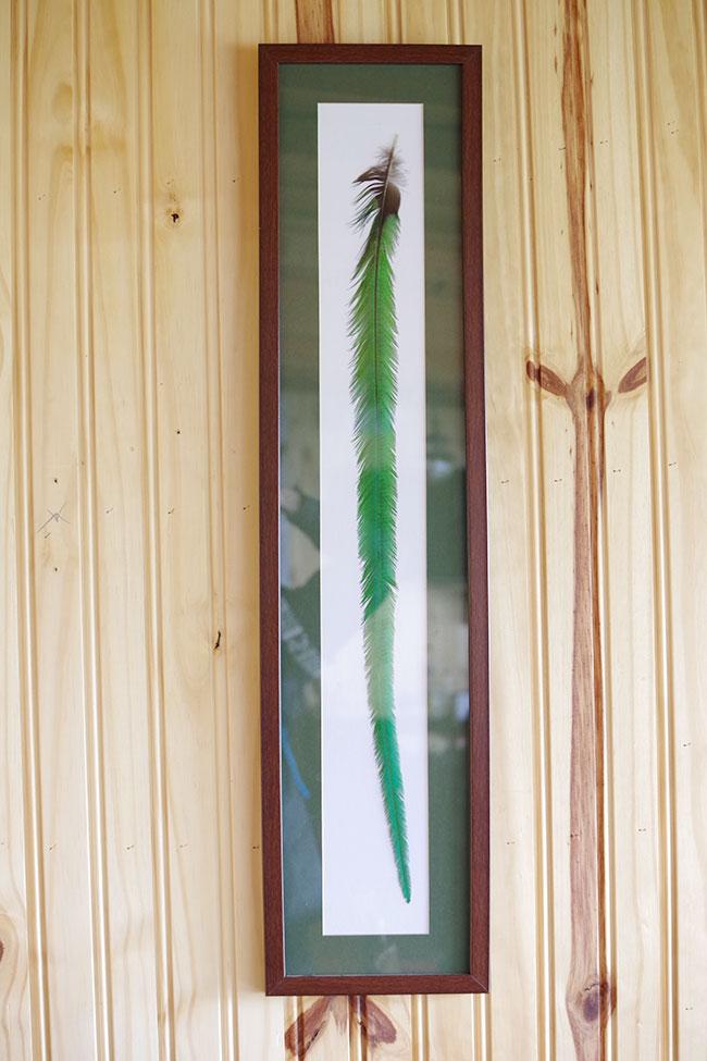ケツァールの羽根