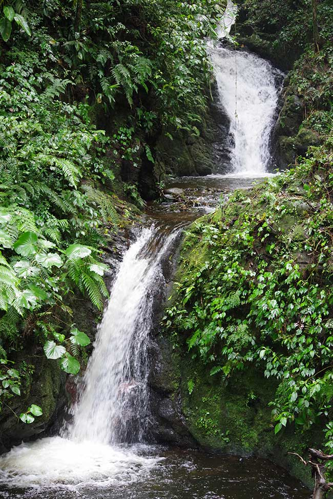 モンテベルデ自然保護区