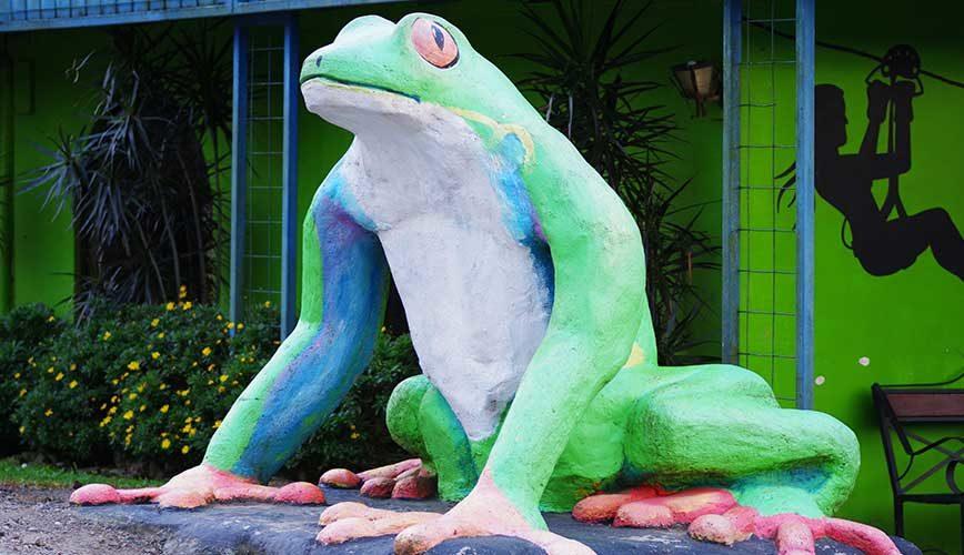 Frog Pond Ranario