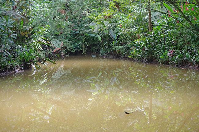 ワニがいる池