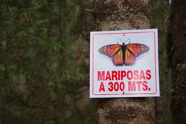 蝶まであと300m